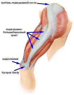 как увеличить мышцы грудины мужчине